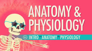 Simple Anatomy And Physiology Introduction To Anatomy U0026 Physiology Crash Course A U0026p 1 Youtube