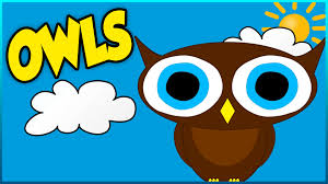 all about owls educational video for kids toddlers and babies