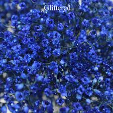 babys breath blue enhanced baby s breath