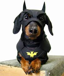 Halloween Batman Costumes 25 Bat Dog Ideas Batman Dog Costume Doberman