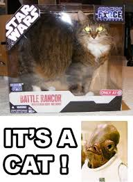Unamused Cat Meme - i find your lack of cats disturbing star wars catsstar wars cats
