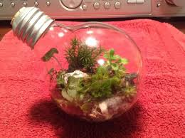 How To Make A Light Bulb How To Make A Light Bulb Terrarium 6 Steps With Pictures