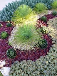 Succulent Gardens Ideas Succulent Gardening Archives Gardening And Patio