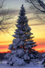 622 best winter images on pinterest landscapes nature and