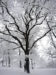 25 unique winter trees ideas on tree water color