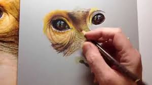 photorealistic speed drawing of an orangutan youtube