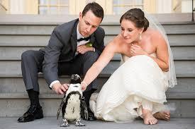 wedding photographers in maryland kyle maryland zoo wedding baltimore dc wedding