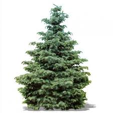 sweetlooking home depot christmas tree recycling pleasing
