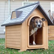 Ideas & Tips Snazzy Handmade Plywood Cool Dog Houses With Slate