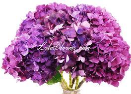 wholesale hydrangeas purple hydrangea flowers wholesale hydrangeas wedding ideas