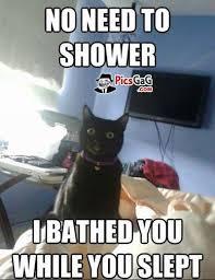 Funny Meme Jokes - funny cat meme joke picture this cat joke make you smile gag