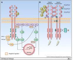 molecular pathways fibroblast growth factor signaling a new