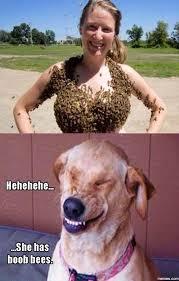 Boob Memes - boob bees funny clone