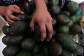 from avocados to autos mexican businesses fear tough times with trump