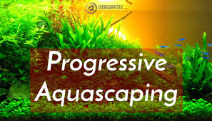 Aquascaping Guide Aquascaping Tips For Beginners Experienced Exotic Aquaristic