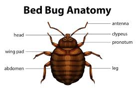 Bed Bug Com How To Get Rid Of Bed Bugs U2013 The Ultimate Guide On How To Kill Bed