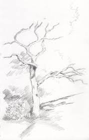 White Oak Tree Drawing Dead Oak Tree By Raphaelcorrino On Deviantart