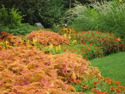 garden decor lovely border landscaping and orange flower for
