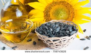 sunflower oil sunflower seeds small sack stock photo 759743626