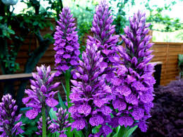 beautiful winter garden flowers 16 best flower choices for a bold