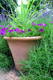 native plants for pots potted plants that are top heavy can blow over tips for growing a