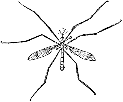 crane fly clipart etc