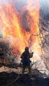 Wildfire Weed by Georgetown California Wildfires Spread Pictures Cbs News
