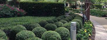 commercial trees and shrubs evergreen landscaping