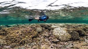 great barrier reef before and after bleaching photos the