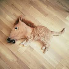 Horse Head Mask Meme - a horse cat pinterest horse cat and animal
