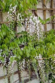 12 Best Plants That Can by Fragrant Night Bloom Flowers Best Flowers That Only Bloom At Night