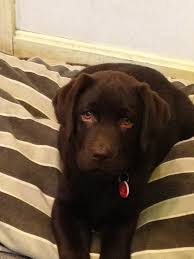 11am cute puppy u2014 monty those droopy eyes get me every time