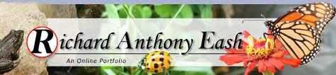 Ladybug Resume Online Portfolio Resume