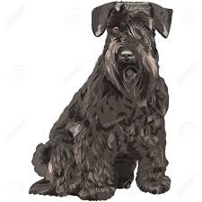 108 miniature schnauzer stock illustrations cliparts and royalty