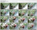 Hiddencam: Village aunty bathing in river [New] – FilesQuick