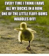 Meme Duck - 25 best memes about ducks in a row ducks in a row memes