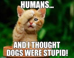 Stupid Cat Meme - cat fail imgflip