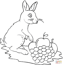 rabbit and grape coloring page free printable coloring pages