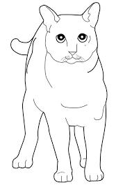 97 cat u0027s pic images cat colors cats