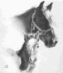 horse pencil art sketch horse on white background detailed pencil