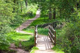 free images forest path pathway grass outdoor track trail