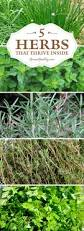 windowsill herb gardening archives herb gardening today