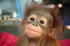 Baby Monkey Meme - happy monkey baby wimzey happiness joy