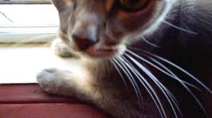 Window Sill Cat Bed Making A Cat Window Sill Shelf Youtube