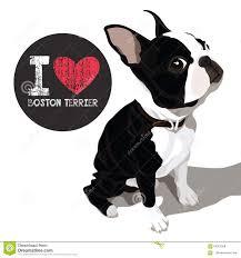 Boston Terrier Flag Boston Terrier Stock Illustrations U2013 246 Boston Terrier Stock