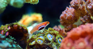 best lighting for corals best lighting for coral reef aquariums the pet supply guy