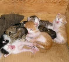 kitty family takes baby bunnies love meow