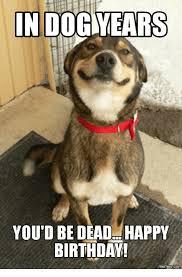 Birthday Dog Meme - in dog years you d be dead happy birthday com dog years meme on