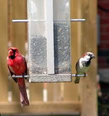 attracting birds to your backyard bird feeder basics