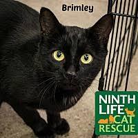 belgian sheepdog rescue ontario oakville on pet adoption ninth life cat rescue of ontario has